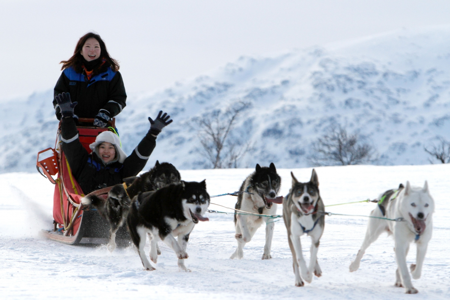 Happy guests dog sledding