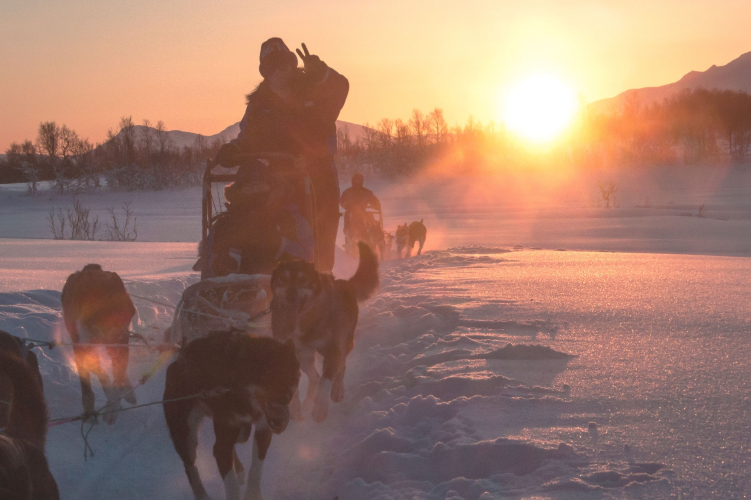 Dog sledding with bright orange sun in the backgrounbd