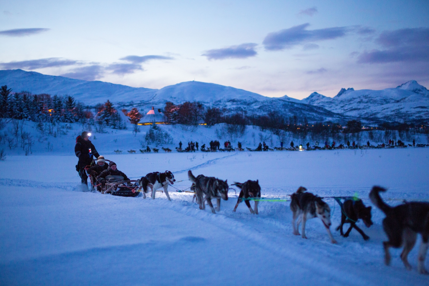 Dog sledding in blue light