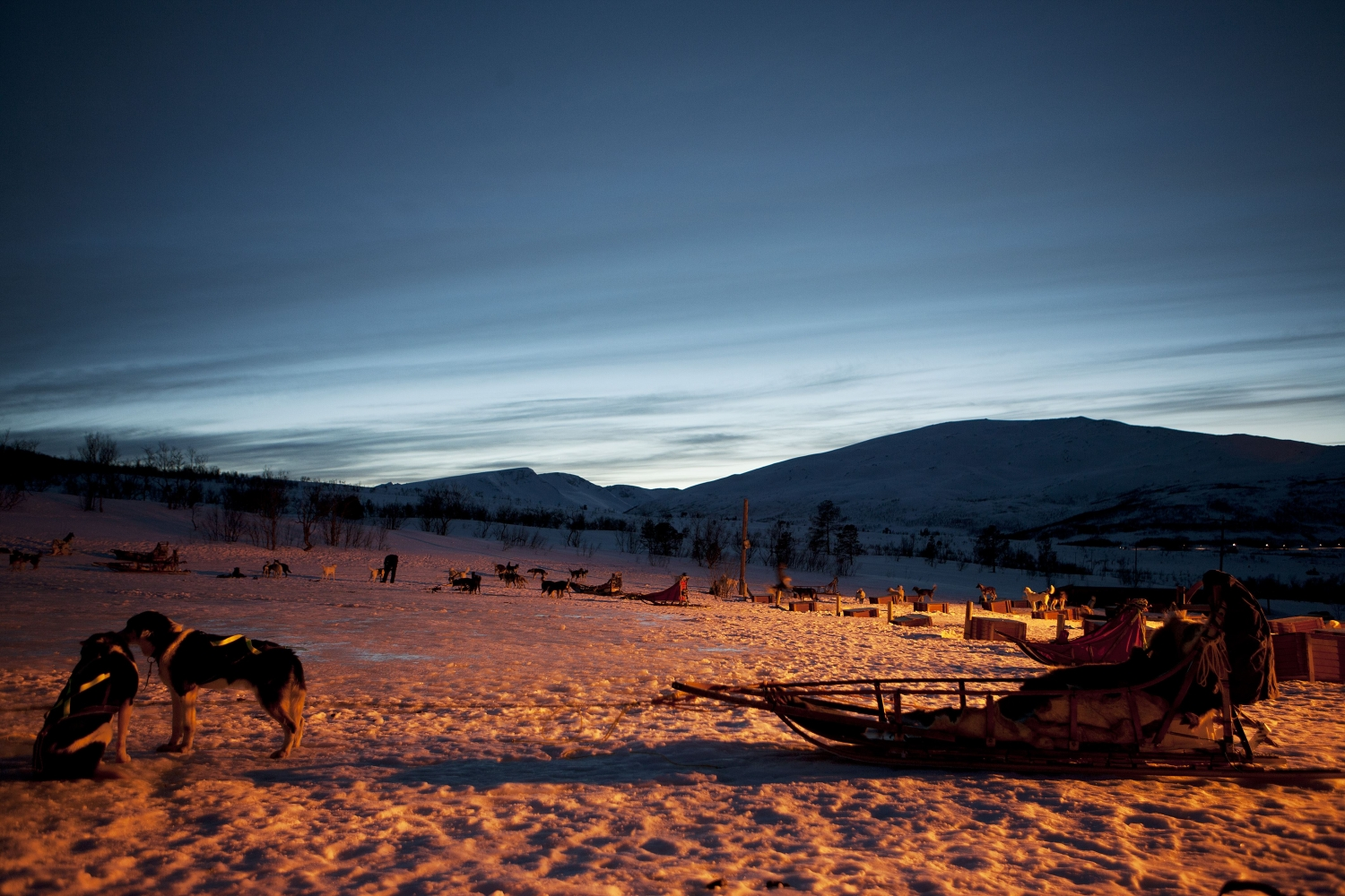 Dogs and sled in evening light