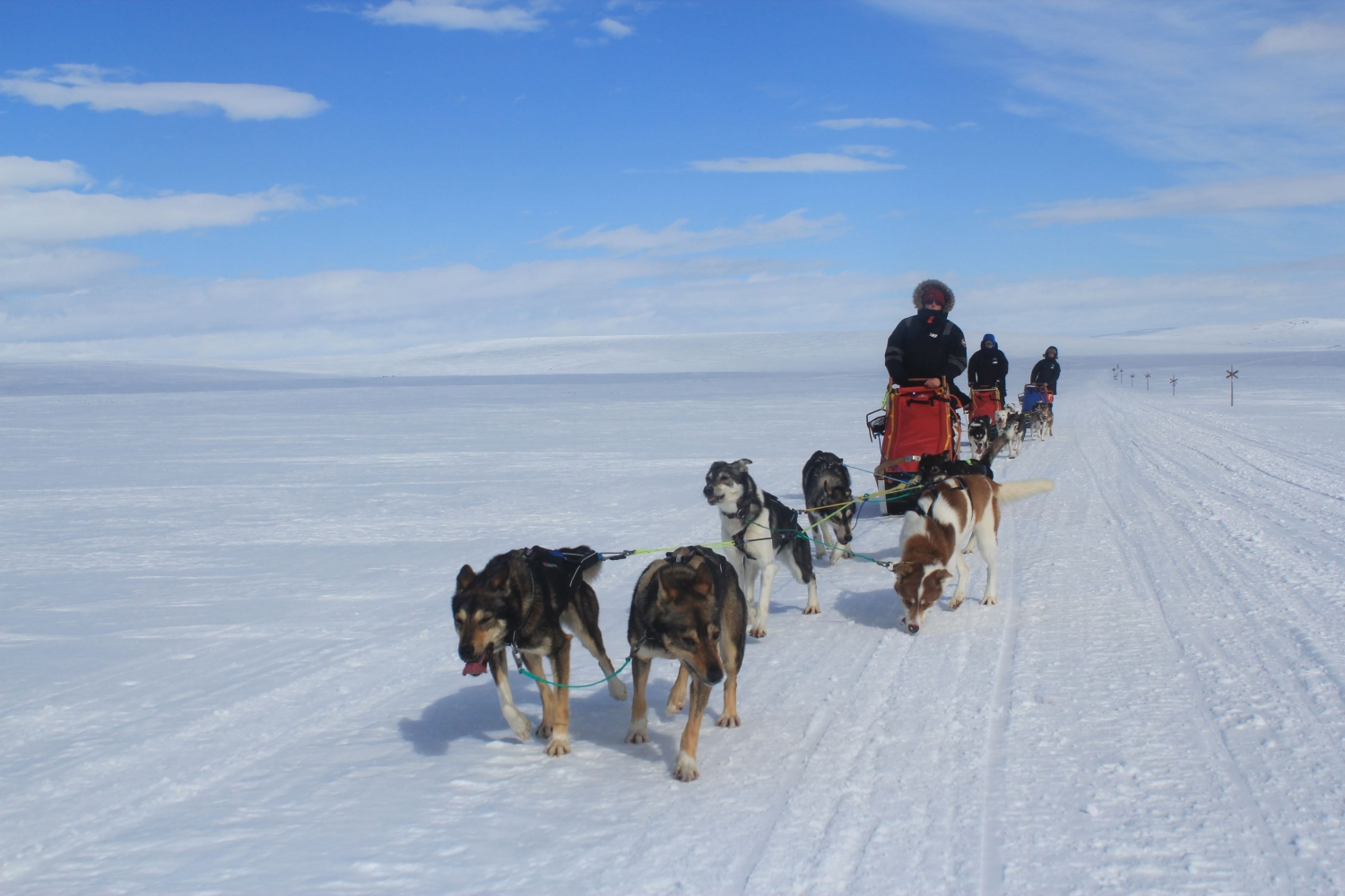 Dog sledding on snowy landscape