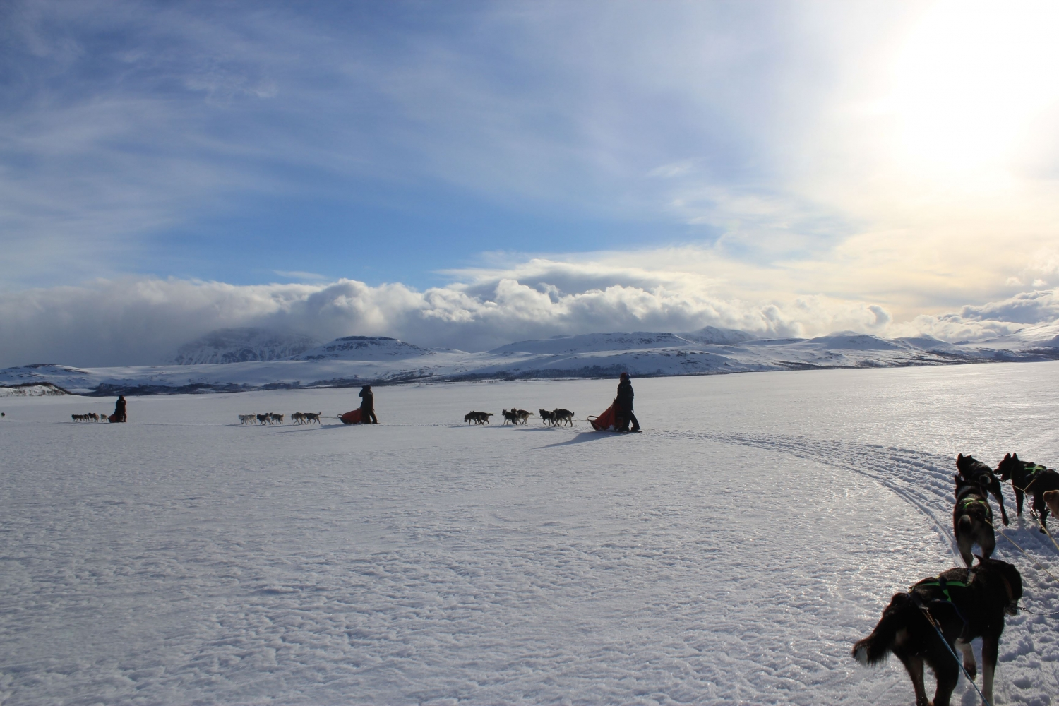 Dog sledding in Arctic winter landscape