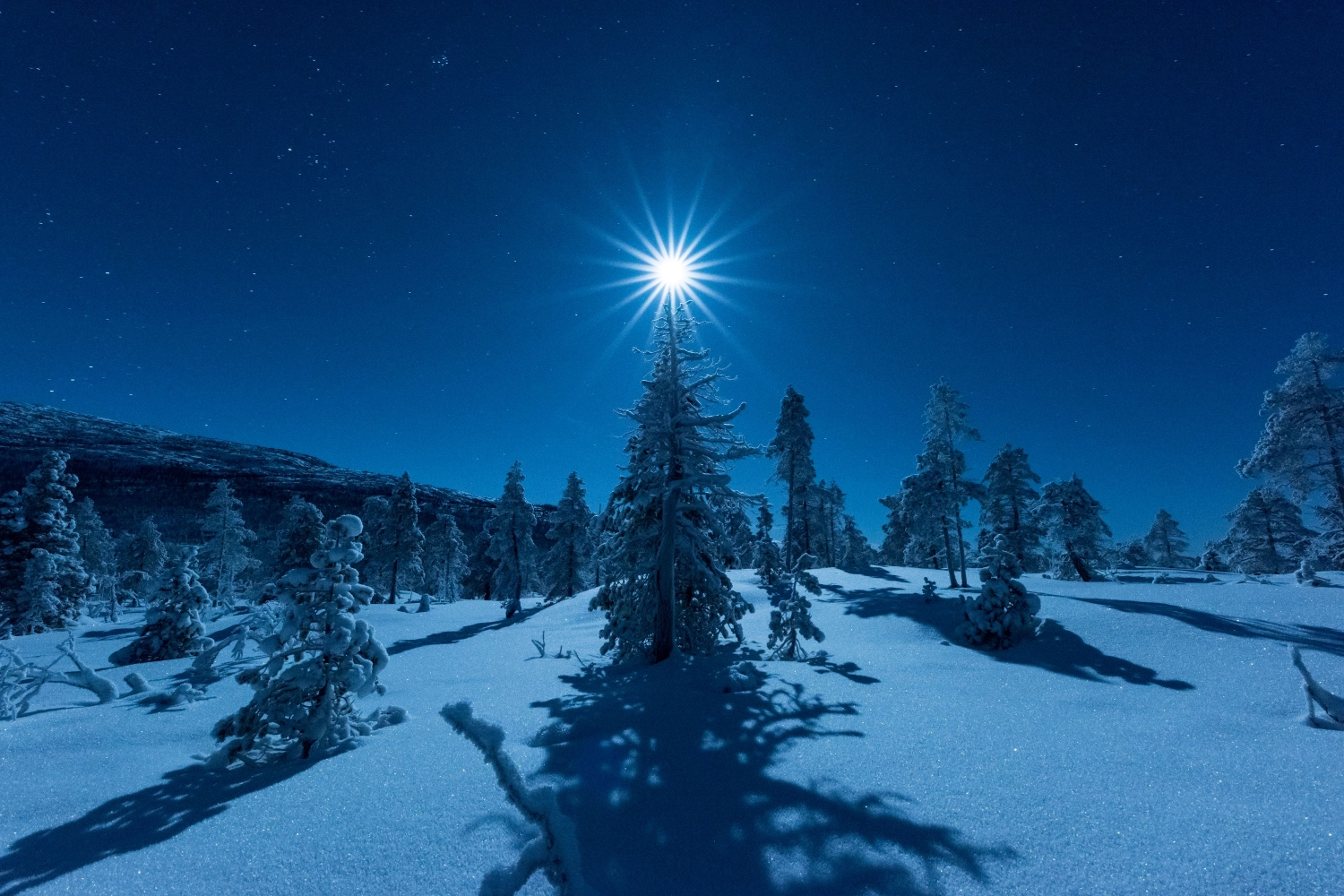 Moonlight above a Christmas tree